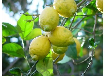 Limones 9 Kg
