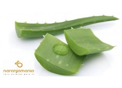 caja con 5 hojas de Aloe Vera ✔