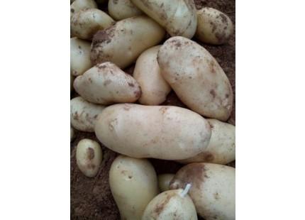 Patata Nueva 10kg