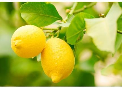 Limones Eureka 1kg ✔