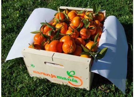 Caja Mandarina Mini 10kg