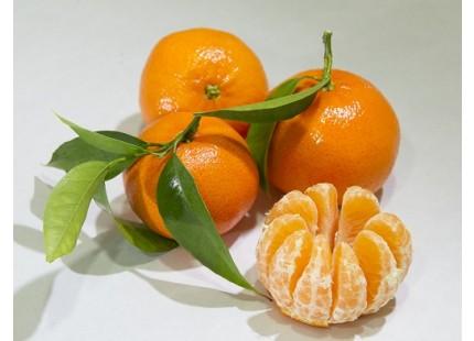 Mandarina Tardia 20kg