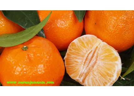 Mandarinas Precoces 15kg