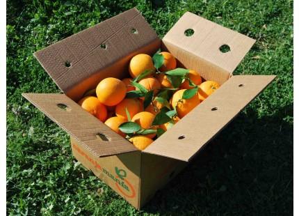 Caja Mixta 19kg de Naranja Mesa (14kg) + Tomate Valenciano (5kg)