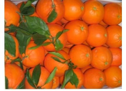 Caja Mixta 19 kg: Naranja Navelina Mesa +  Mandarina Precoz