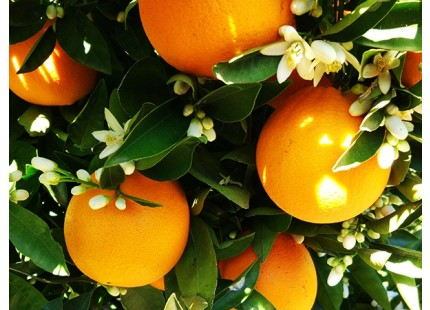Naranjas Eco directas del campo 9kg✔
