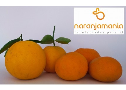 Valencia Late de zumo + Mandarina Tardia 14kg