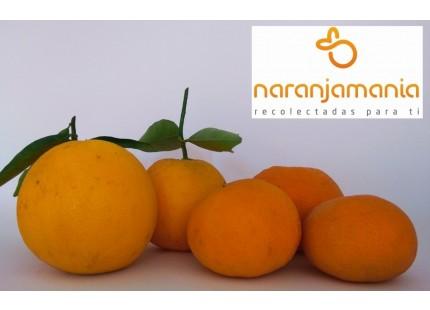 Valencia Late de zumo + Mandarinas Tardia 19kg ✔