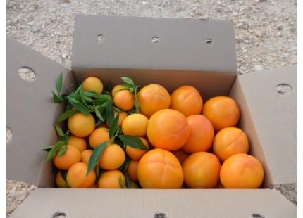 Caja Mixta 15kg. Mandarina Clemenules y Caqui Persimon