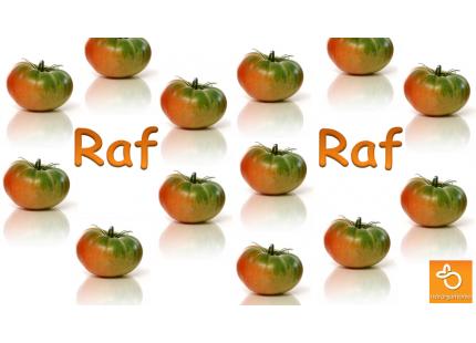 Tomate raf 1kg ✔