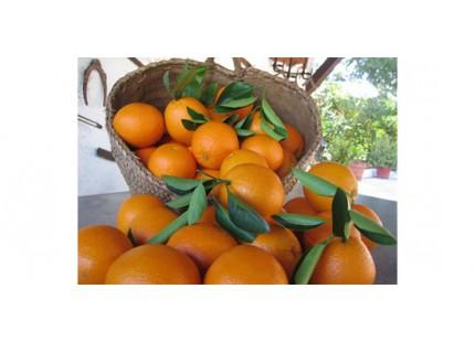 Naranja Valencia Late zumo  9 kg