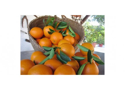 Naranja Valencia Late mesa + Valencia Late zumo 15kg
