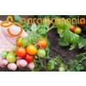 Tomate Cherry Eco 1kg ✔