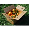 Caja Mixta 9kg de Naranja Mesa (7kg) + Tomate Valenciano (2kg)