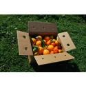 Caja Mixta 14 kg:  Naranja Navel Lane-Late mesa +  Mandarina Tardia