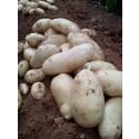 Patata Nueva 1kg