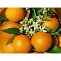 Naranja Valencia Late zumo 14 kg