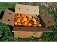 Caja Mixta 14 kg:  Naranja Navel Lane-Late zumo +  Mandarina Tardia