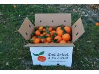 Caja Mixta 10 kg:  Naranja Navel Lane-Late mesa +  Mandarina Tardia