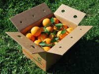 Caja Mixta 9kg de Naranja Zumo (7kg) + Calabacín (2kg)