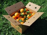 Caja Mixta 19kg de Naranja Zumo (14kg) +  Calabacín (5kg)✔