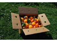 Caja Mixta 15 kg:  Naranja Navel Lane-Late mesa +  Mandarina Tardia