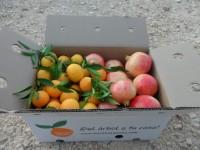 Caja Mixta 20kg Mandarina Clemenules y Granada Mollar