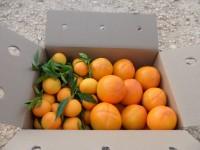 Caja Mixta 14kg Mandarina y Caqui Persimon