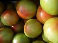 Tomate Tradicional Valenciano 15kg de Tamaño Medio