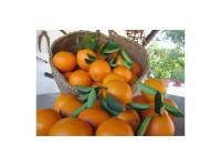 Naranja Valencia Late zumo 5kg