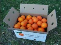 Naranja Lane-Late para Zumo 14kg