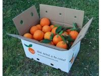 Naranja Navel Lane-Late mesa + Navel Lane-Late zumo 19kg