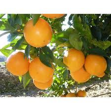 Naranjas Naranjamania