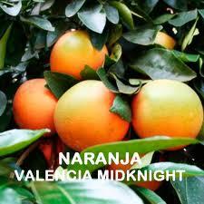 valencia midknight naranjamania