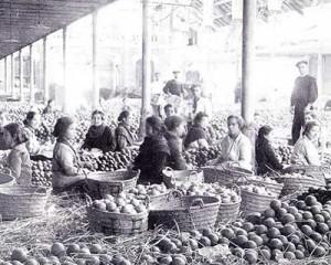 Mujeres empapelando Naranjas a principio de siglo en Carcaixent