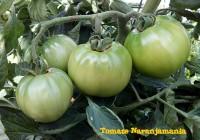 Tomate Valenciano Verde